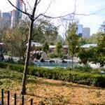 Visitar el zoo de Central Park en Nueva York
