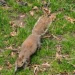 Portafolio de MPVNY - Las ardillas de Central Park