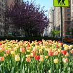 ¿Qué hacer en NYC en Marzo y Abril 2017 (vacaciones de Semana Santa/Pascuas y de primavera)?