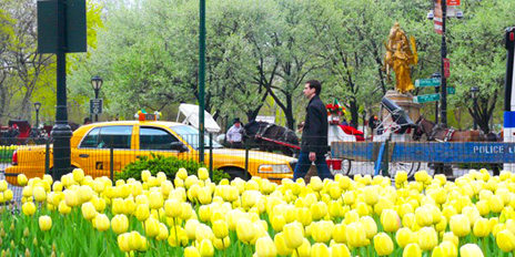 nueva york primavera