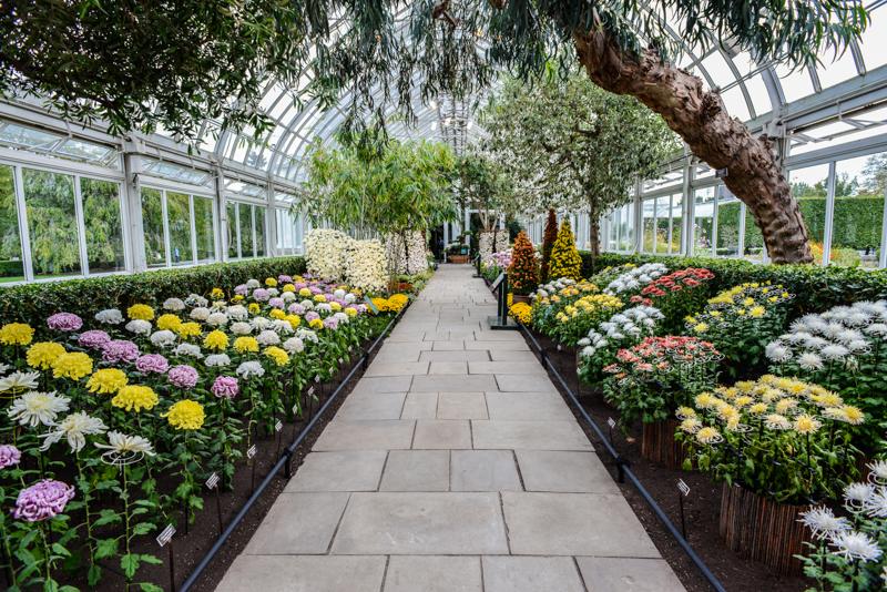 Visiten el Jardín Botánico de Nueva York
