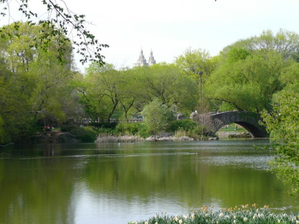 Central Park the Pond NYC