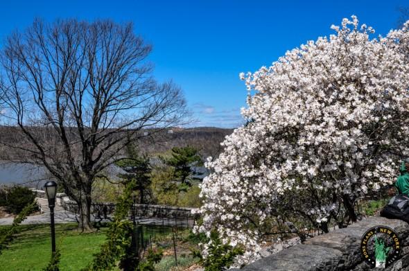 The Cloister NY primavera
