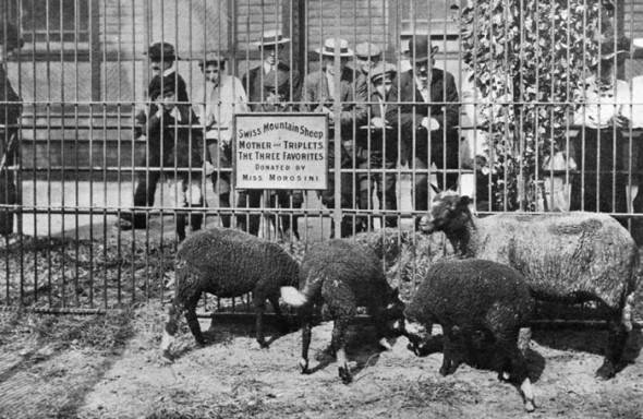 Zoo Central Park NY 1934