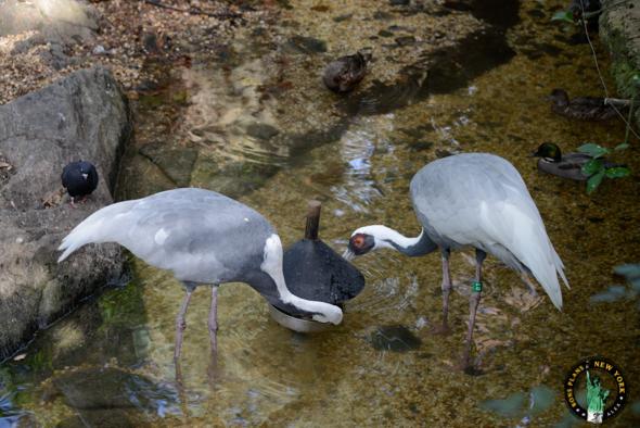 Zoo Central Park NY aves