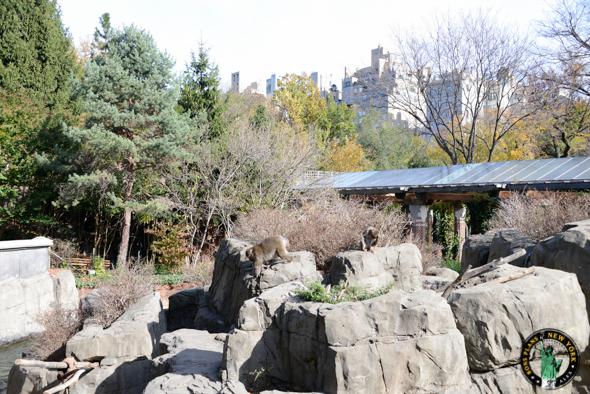 Zoo Central Park NY monos