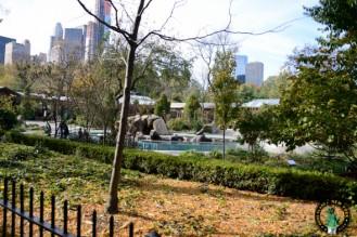 Zoo Central Park NY otarias 1