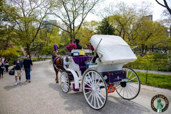 Marion calesas caballos en Nueva York 2
