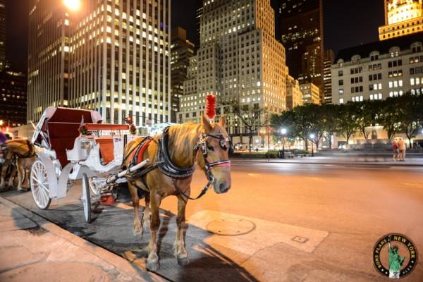 Marion calesas caballos en Nueva York 3