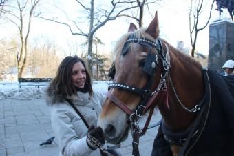 Marion calesas caballos en Nueva York