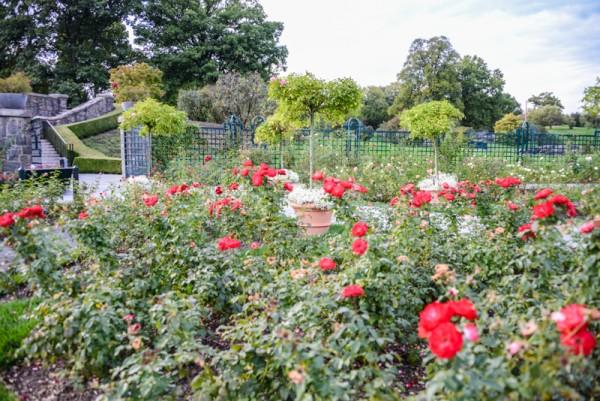 The New York Botanical Garden Bronx BPVNY MPVNY NYCTT 31