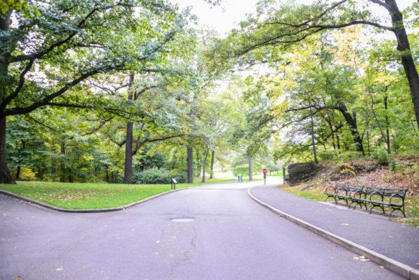 The New York Botanical Garden Bronx BPVNY MPVNY NYCTT 40