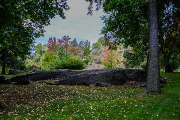 The New York Botanical Garden Bronx BPVNY MPVNY NYCTT 52