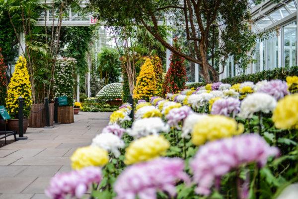 The New York Botanical Garden Bronx BPVNY MPVNY NYCTT 56