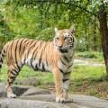 Zoo del Bronx NYC 24