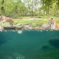 Zoo del Bronx NYC 27