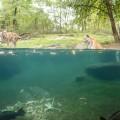 Zoo del Bronx NYC 28