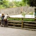 Zoo del Bronx NYC 30