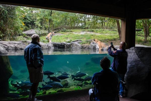 Zoo NYC 4