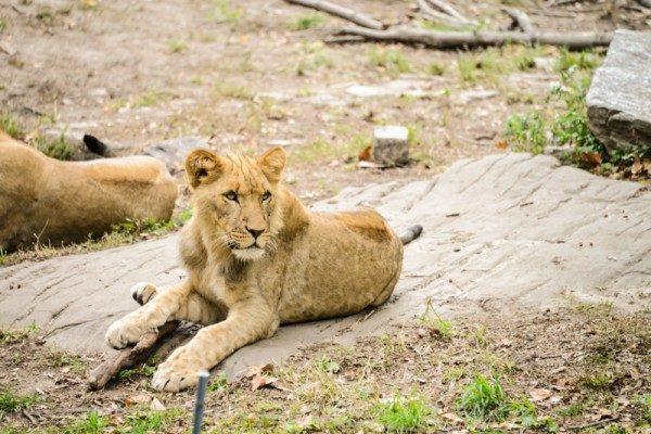 Zoo NYC 44