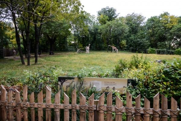 Zoo  NYC 5