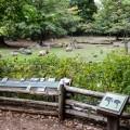 Zoo del Bronx NYC 6