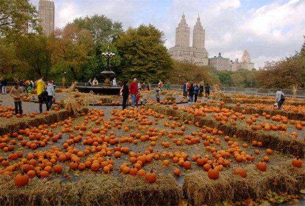 central-park-pumpkin-festival-600x406-1
