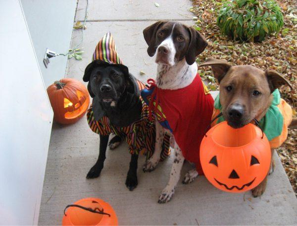 halloween-dogs-600x456